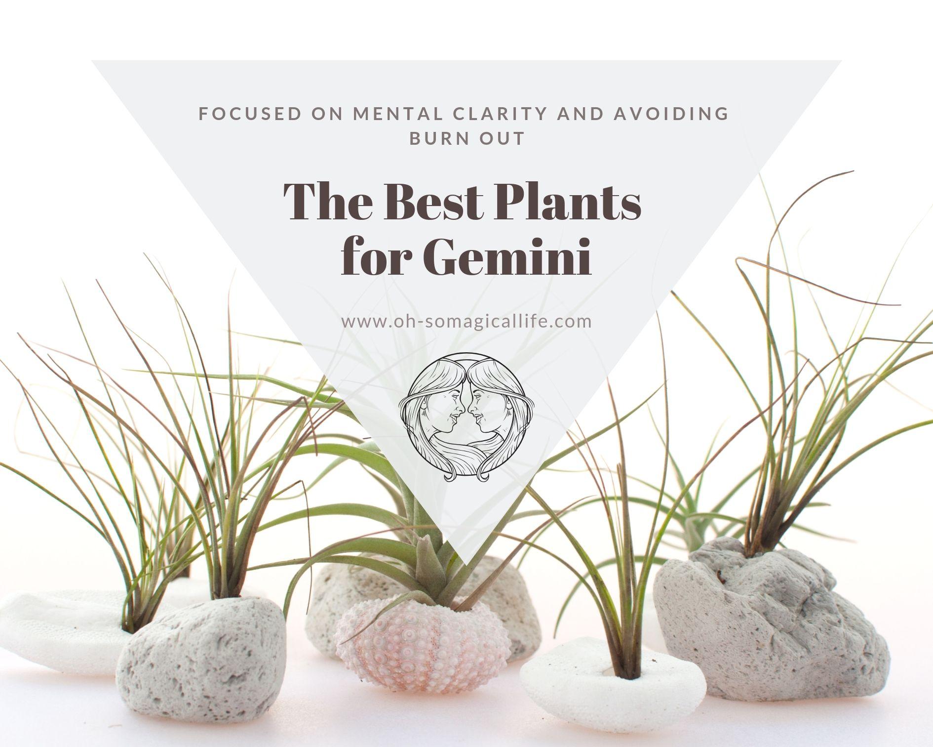 The-Best-Plants-for-Gemini.jpg