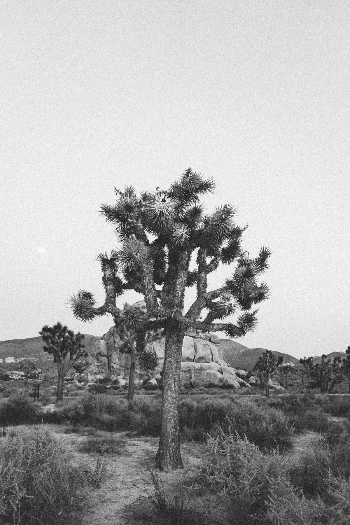 scott-snyder-photo-joshua-tree-03.jpg