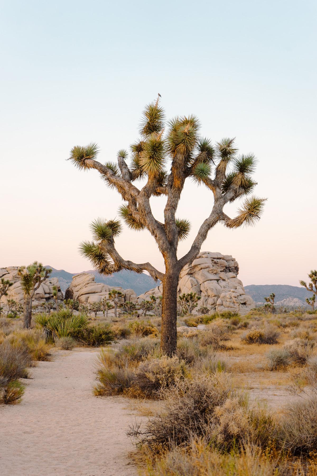 scott-snyder-photo-joshua-tree-10.jpg