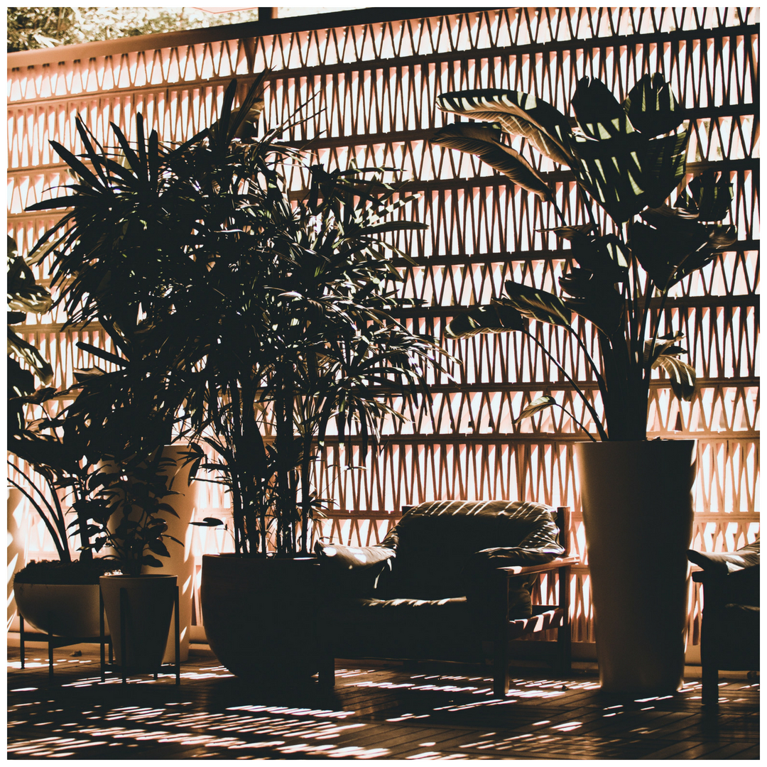 lobby with leather chair, trees in planters.jpeg