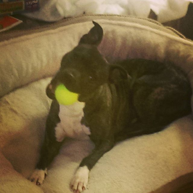 Nala with a new bed and a new ball!!