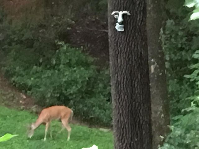 The one eyed tree monster watching over the deer in my backyard!!