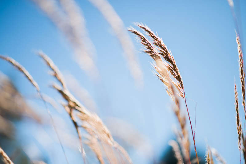 Photo of pices of fall grasses
