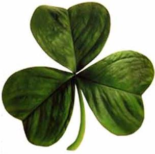 The three-leaf clover representing the Holy Trinity. Image Credit:  George McFinnigan  via  Wikimedia Commons   cc