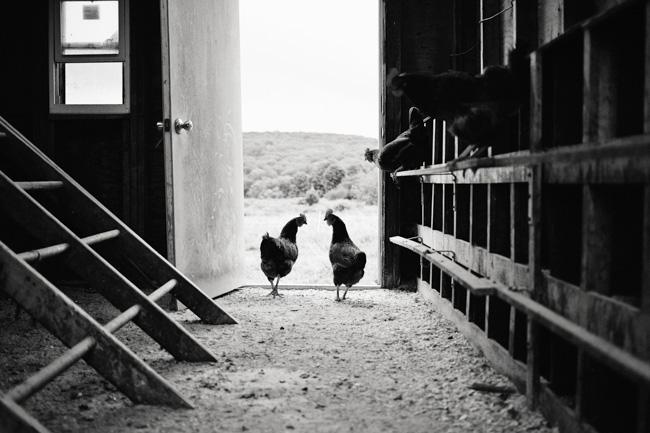 jarren vink glynwood organic farm farmer farming hen