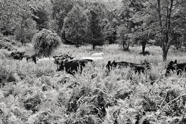 jarren vink glynwood organic farm farmer farming cows