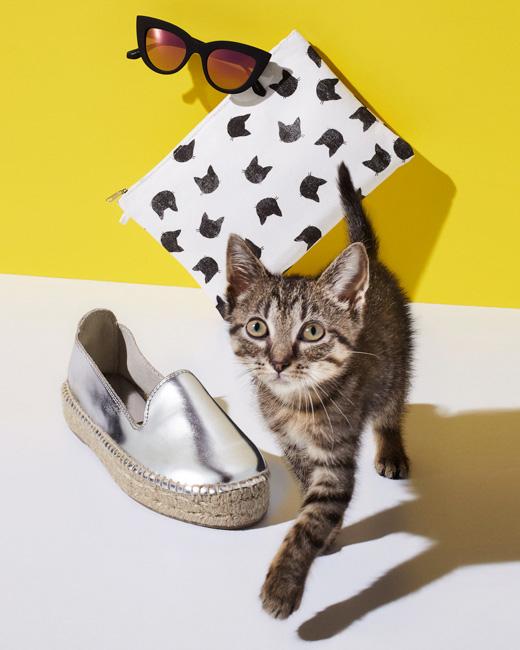 jarren vink redbook kitten cat kittens