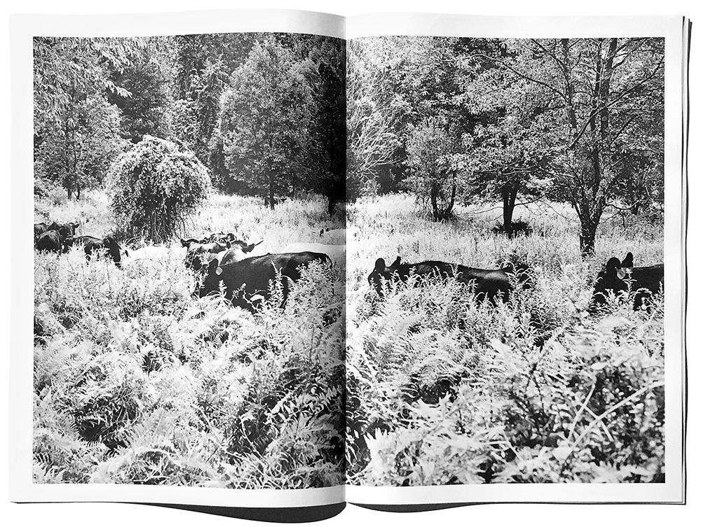 jarren vink stay steady magazine glynwood farm farming agriculture james walton grass and grit farm organic sustainable farming cow cows pasture raised