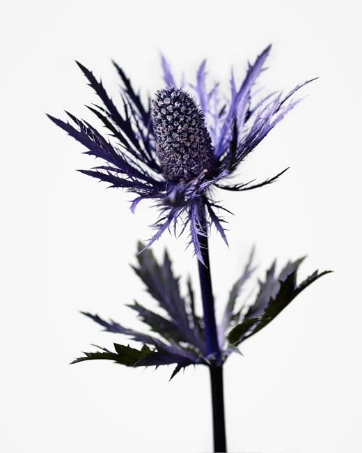 jarren vink flower thistle