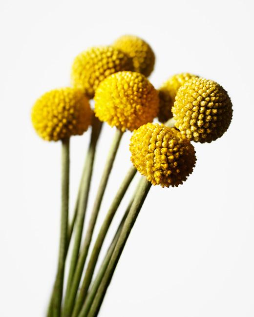 jarren vink flower