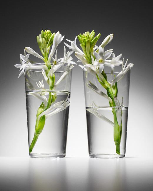 jarren vink flower flowers water glass glasses still life