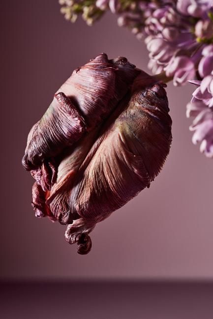 jarren vink alfresco floral
