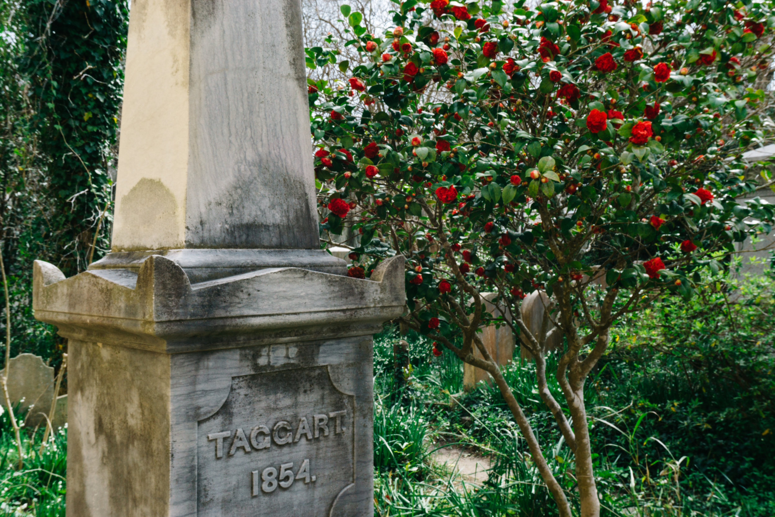 Roses by Unitarian Church of Charleston grave