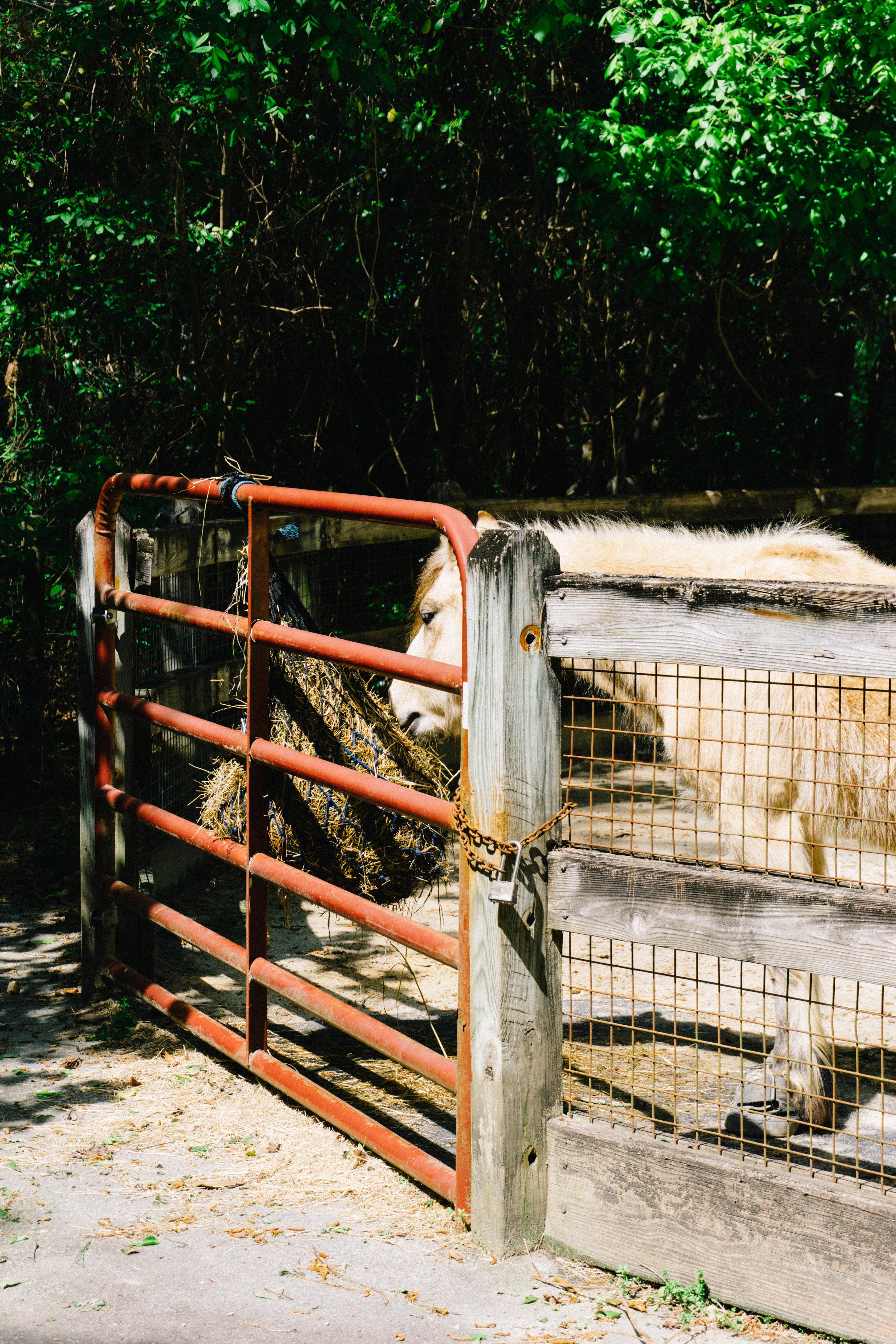 Horse at Riverbanks Zoo barnyard