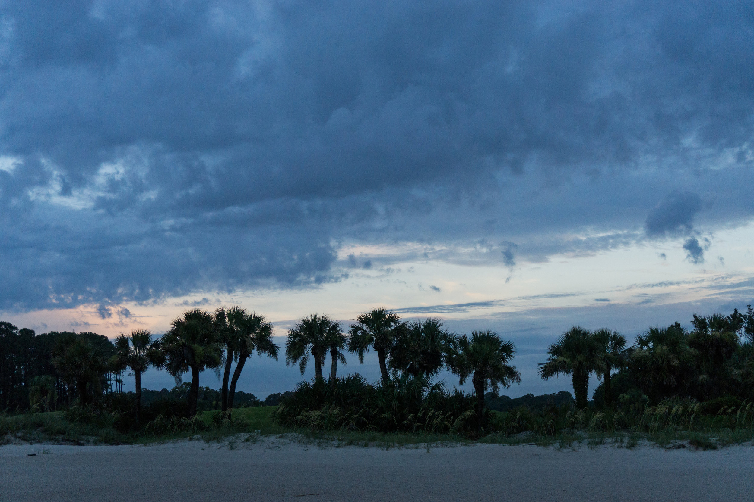 Palm trees before sunset on Hilton Head Island