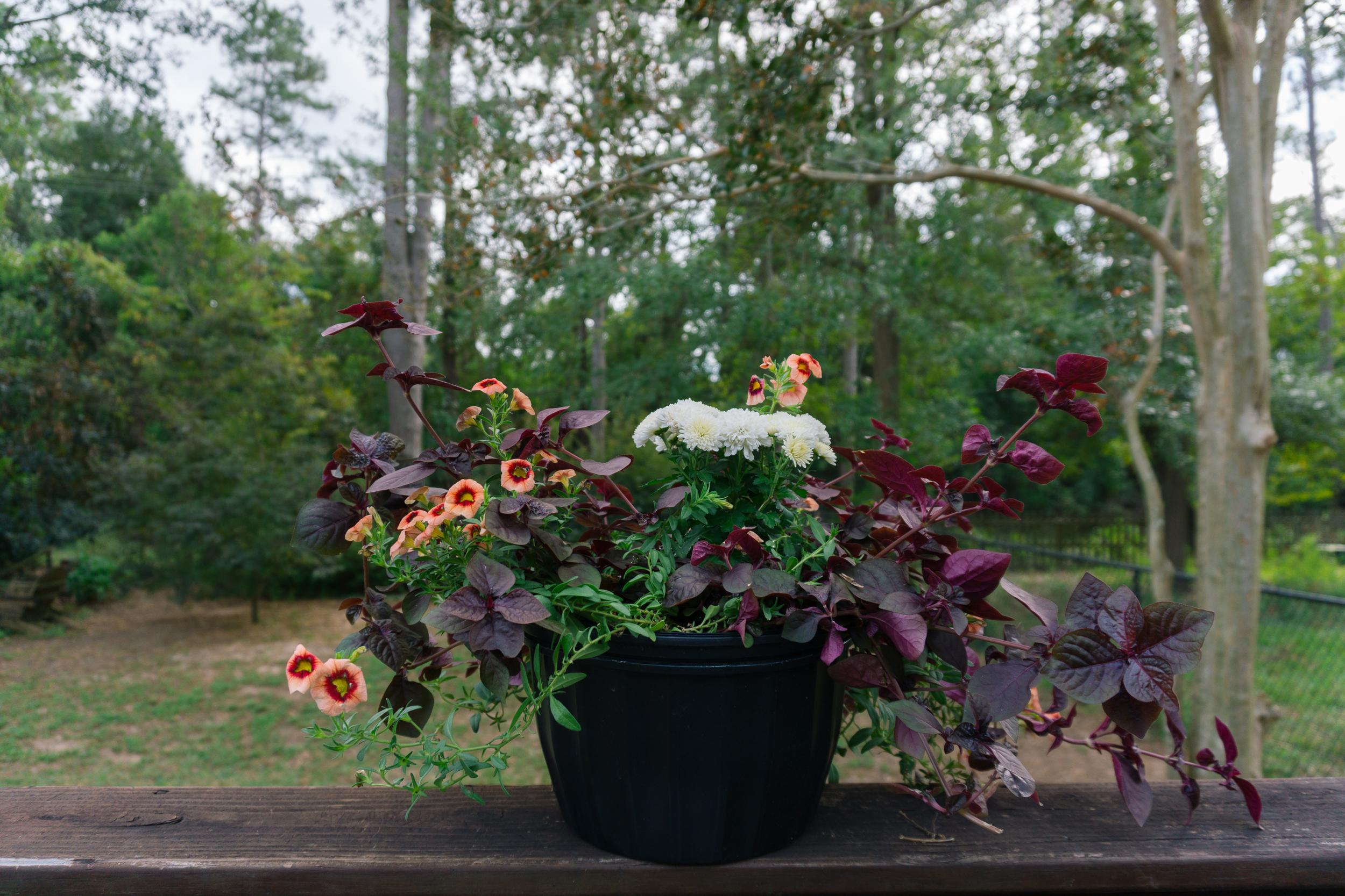 Fall-Flowers-2.jpg