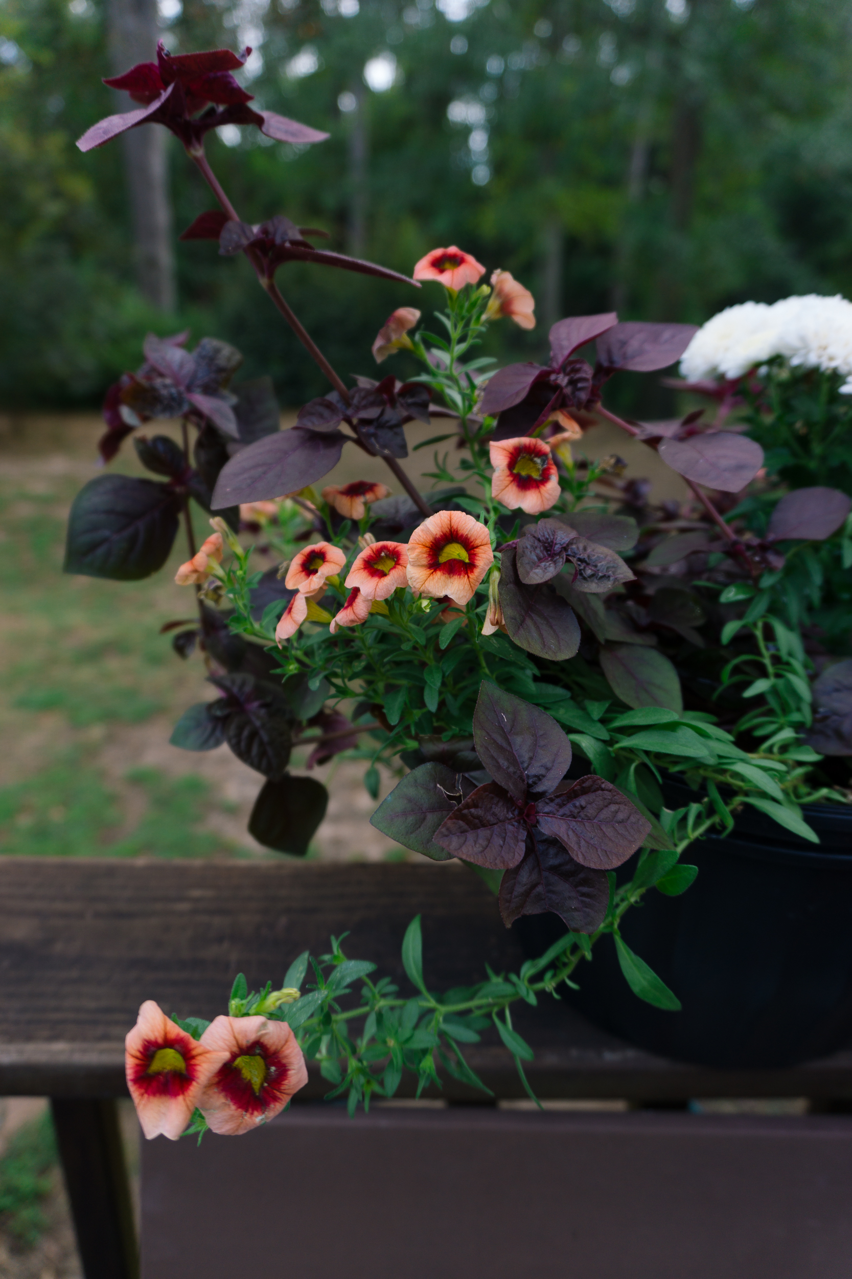 Fall-Flowers-4.jpg