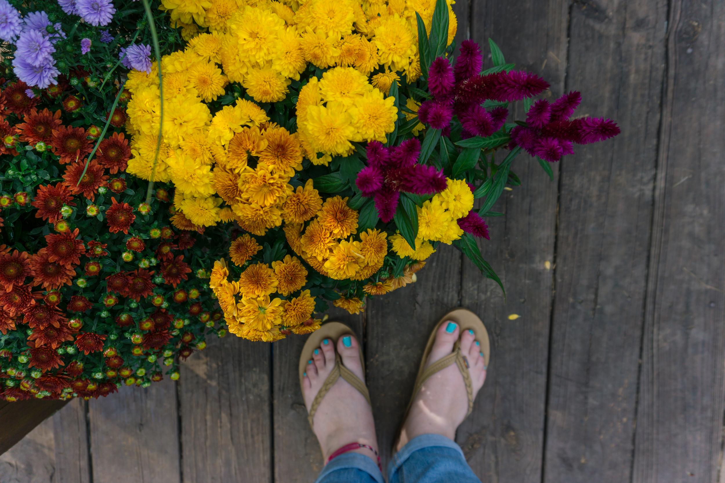 Fall-Flowers-10.jpg