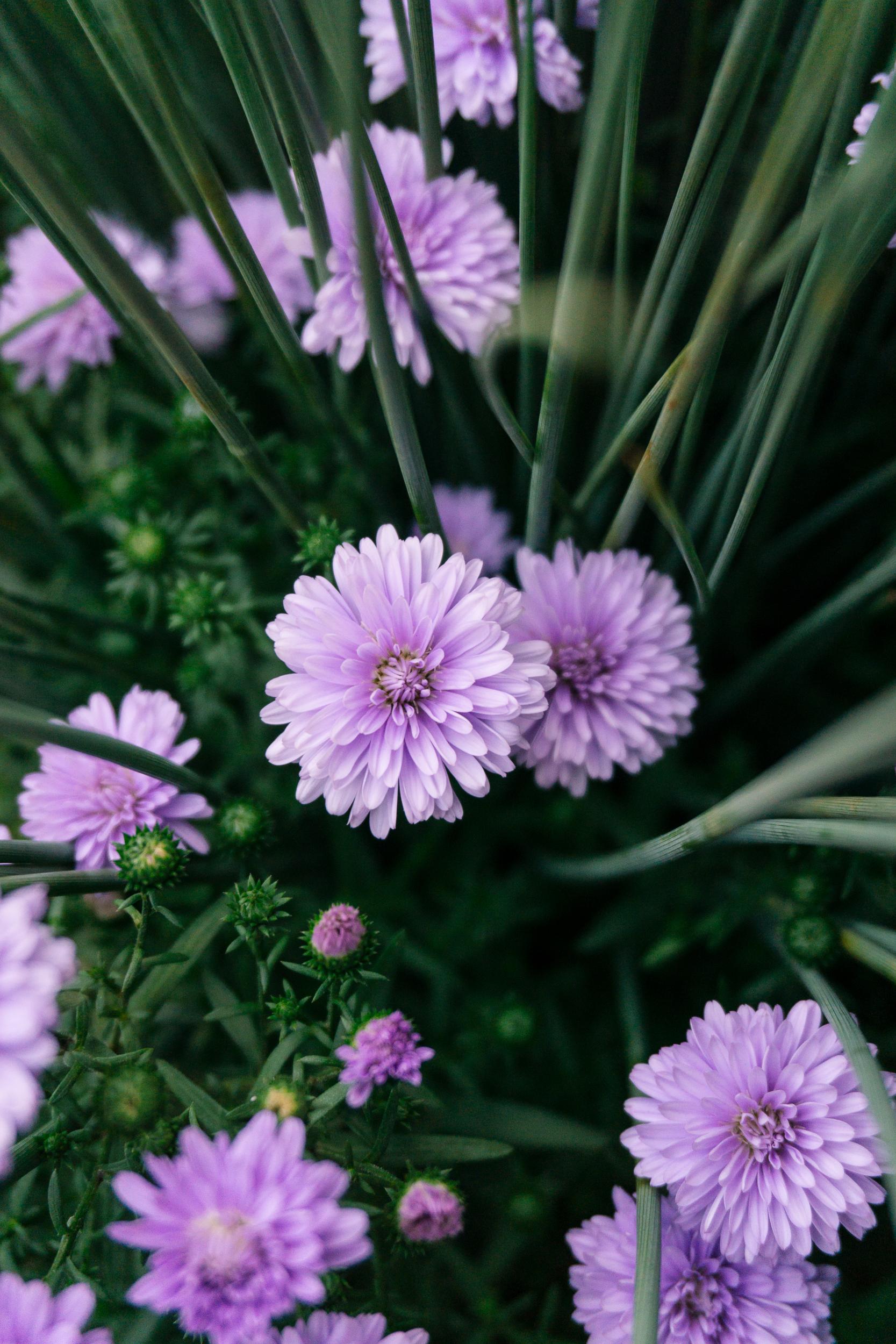 Fall-Flowers-17.jpg