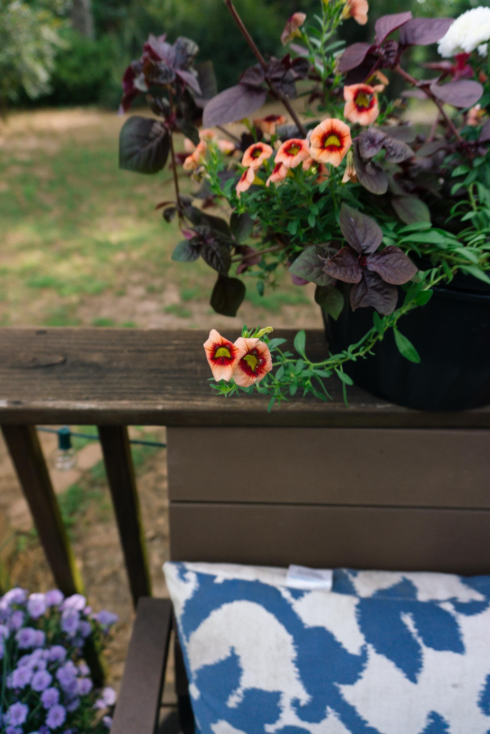 Fall-Flowers-25.jpg