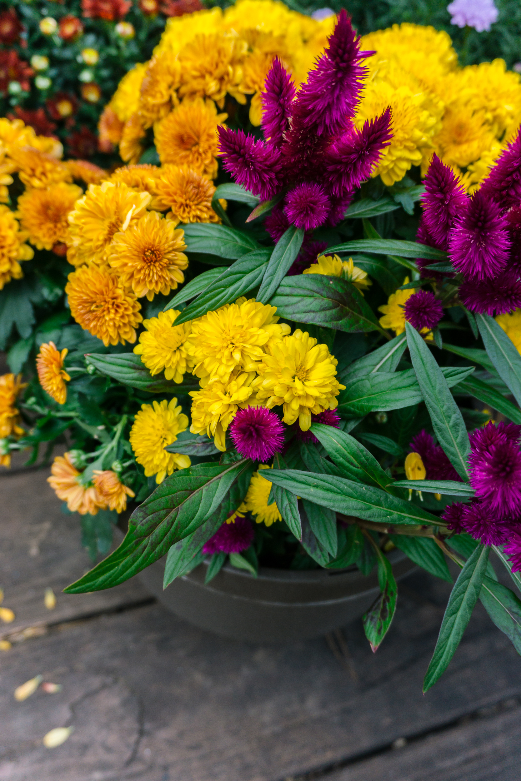 Fall-Flowers-27.jpg