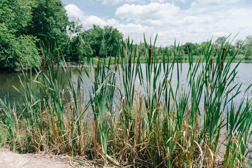 Brick-Pond-Park-North-Augusta-SC-12.jpg