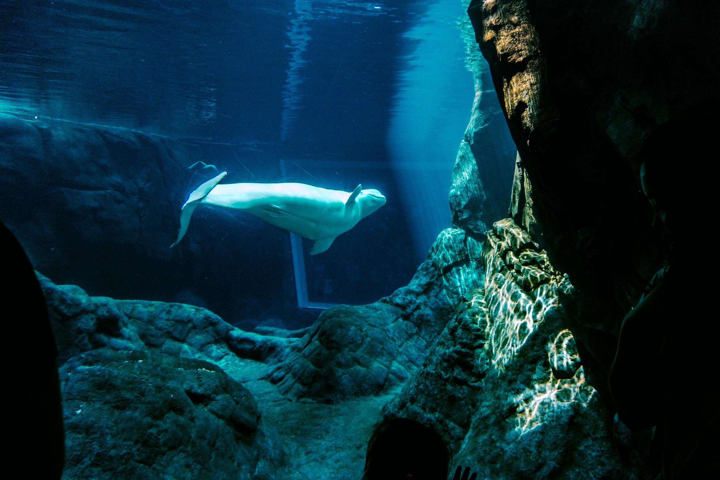 Georgia-Aquarium-9.jpg