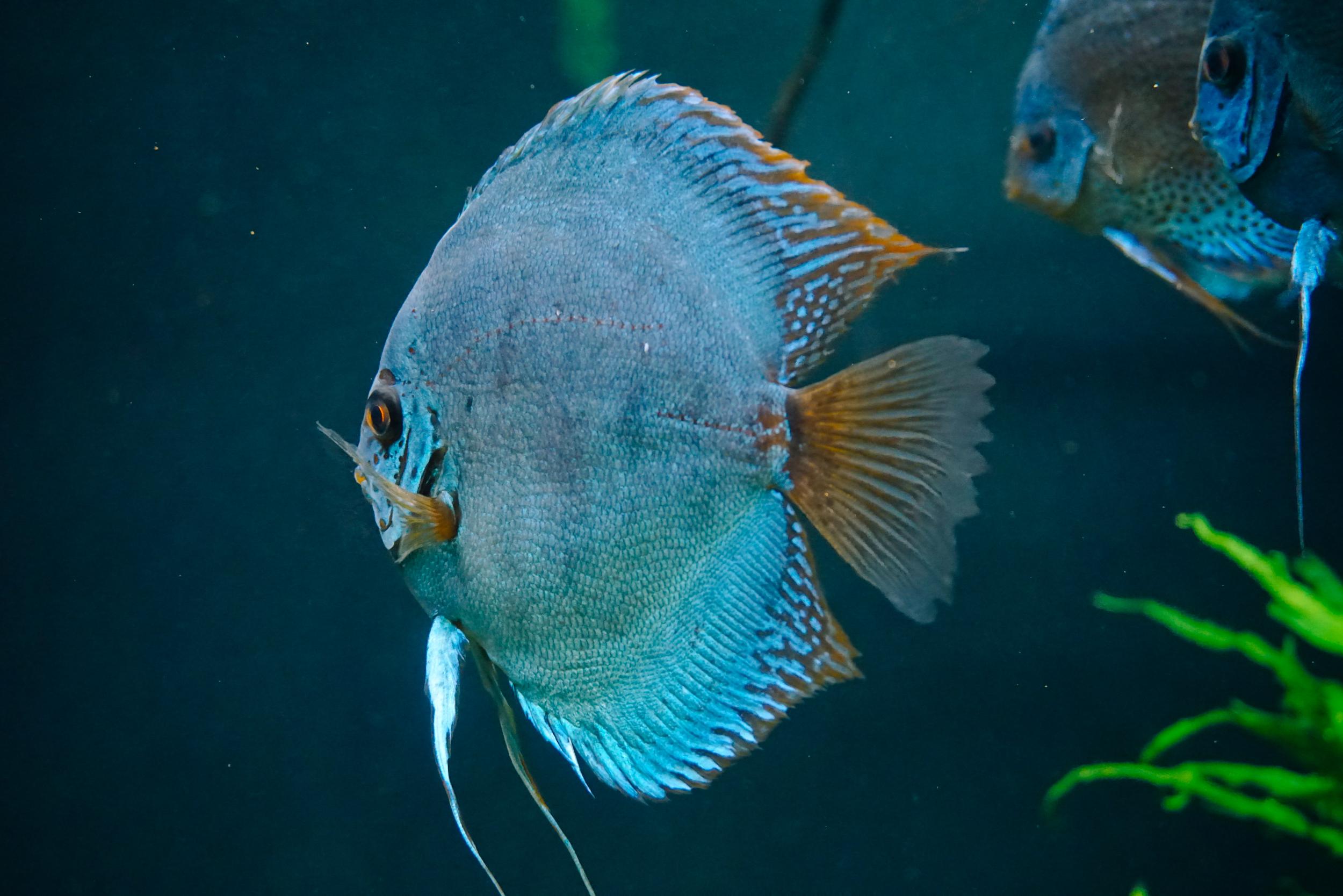 Georgia-Aquarium-21.jpg