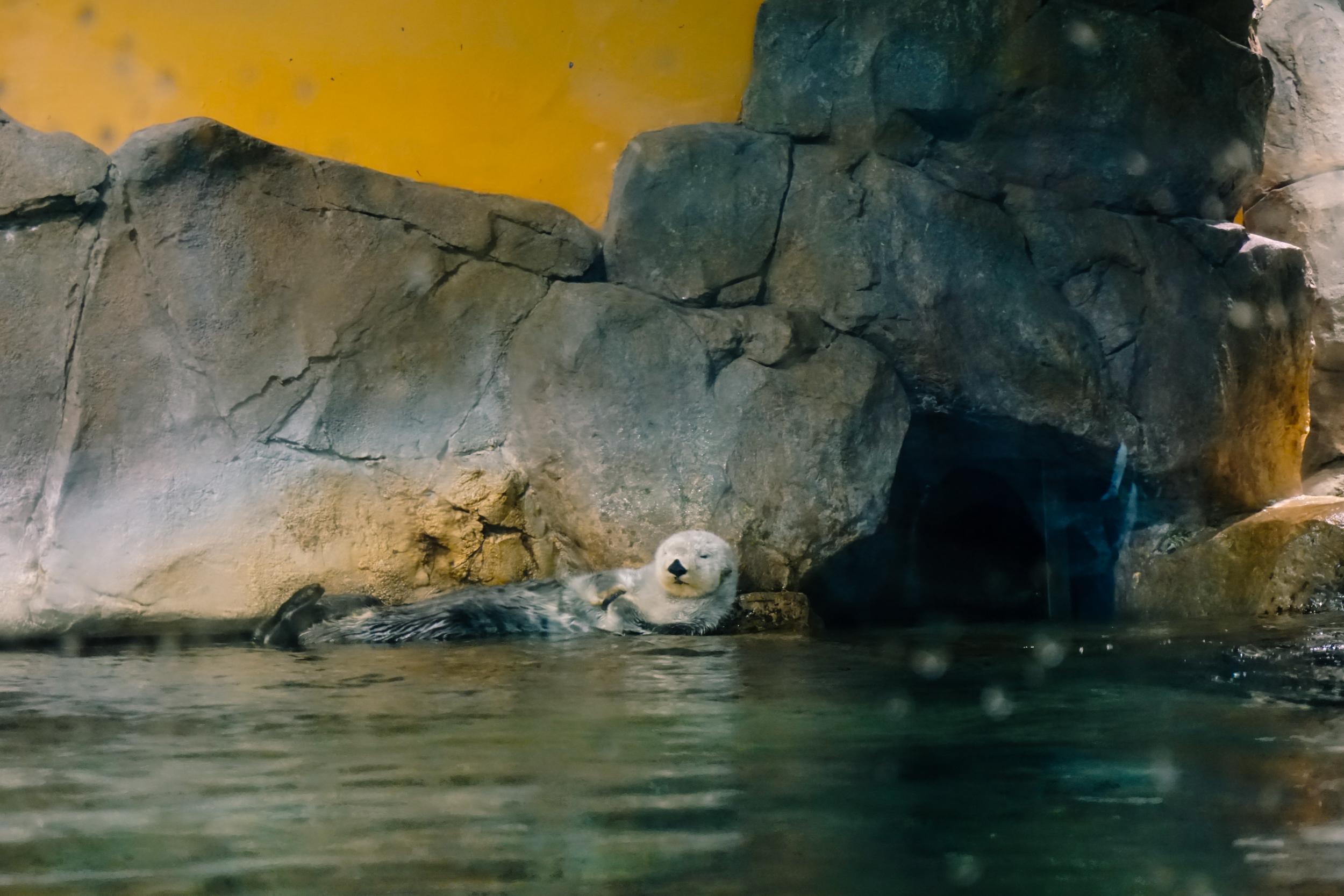 Georgia-Aquarium-27.jpg