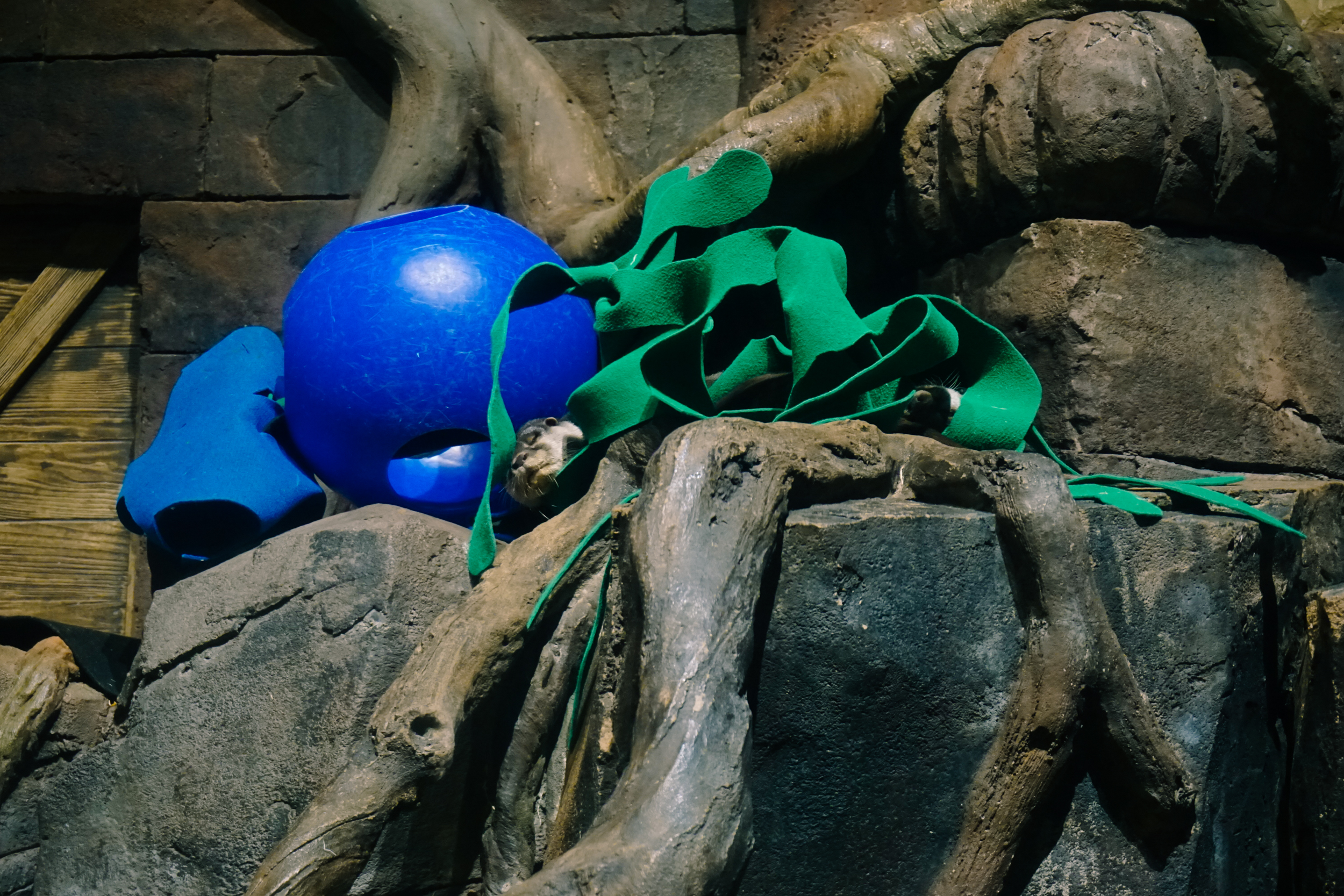 Georgia-Aquarium-23.jpg