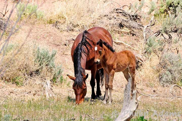 perfect mare and foal .jpg
