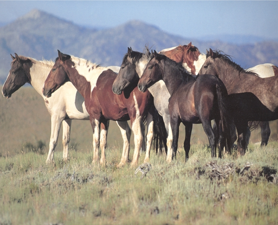 herd looking left.jpg