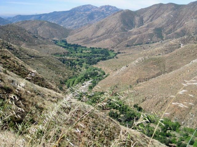 Saddleback trail, near Julian, California