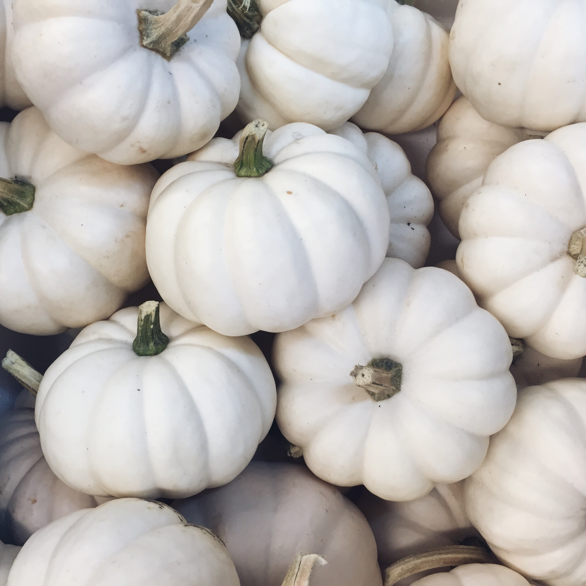 mini white pumpkins // pinebarrenbeauty.com