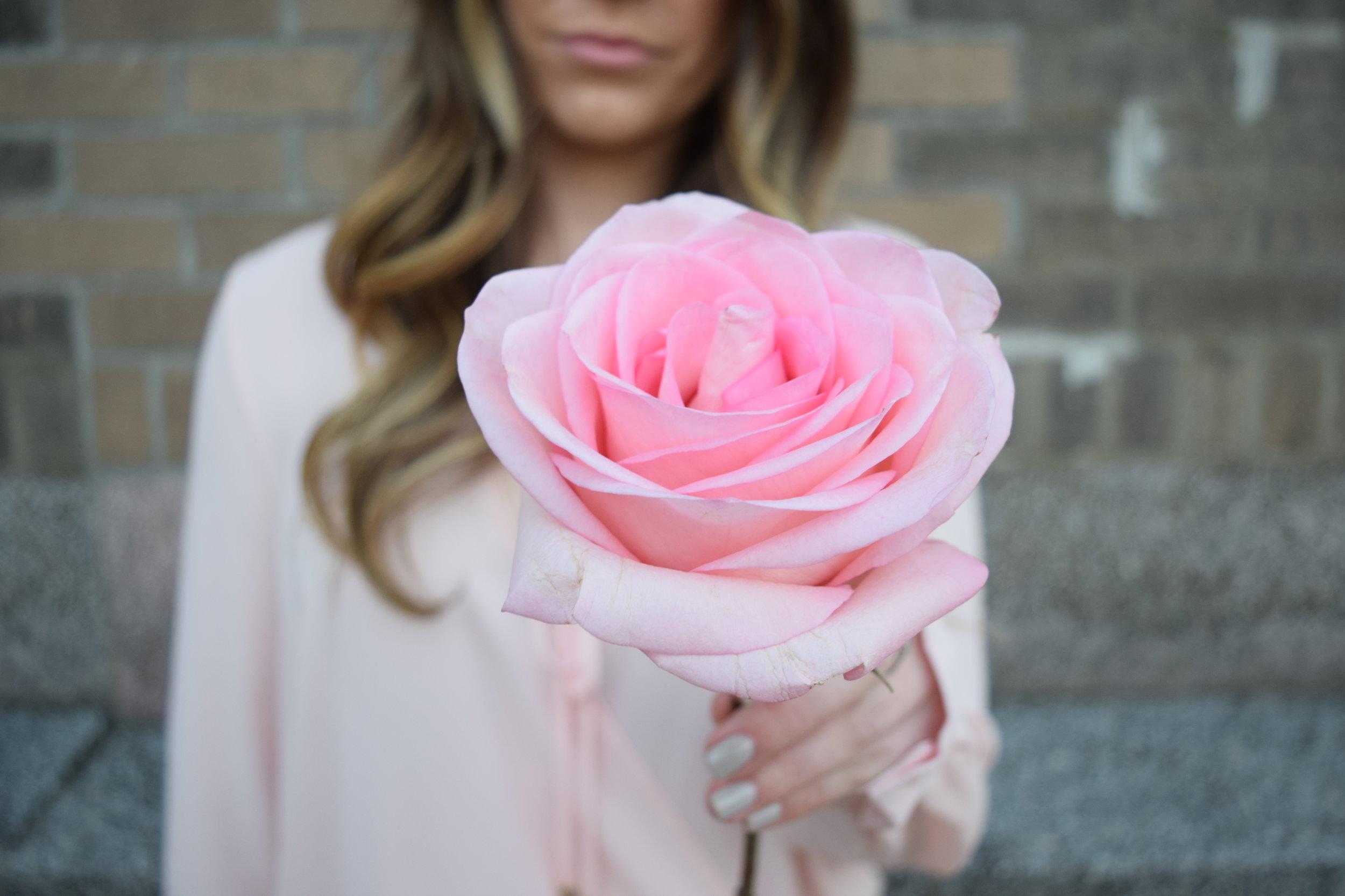 pink rose, valentine's day