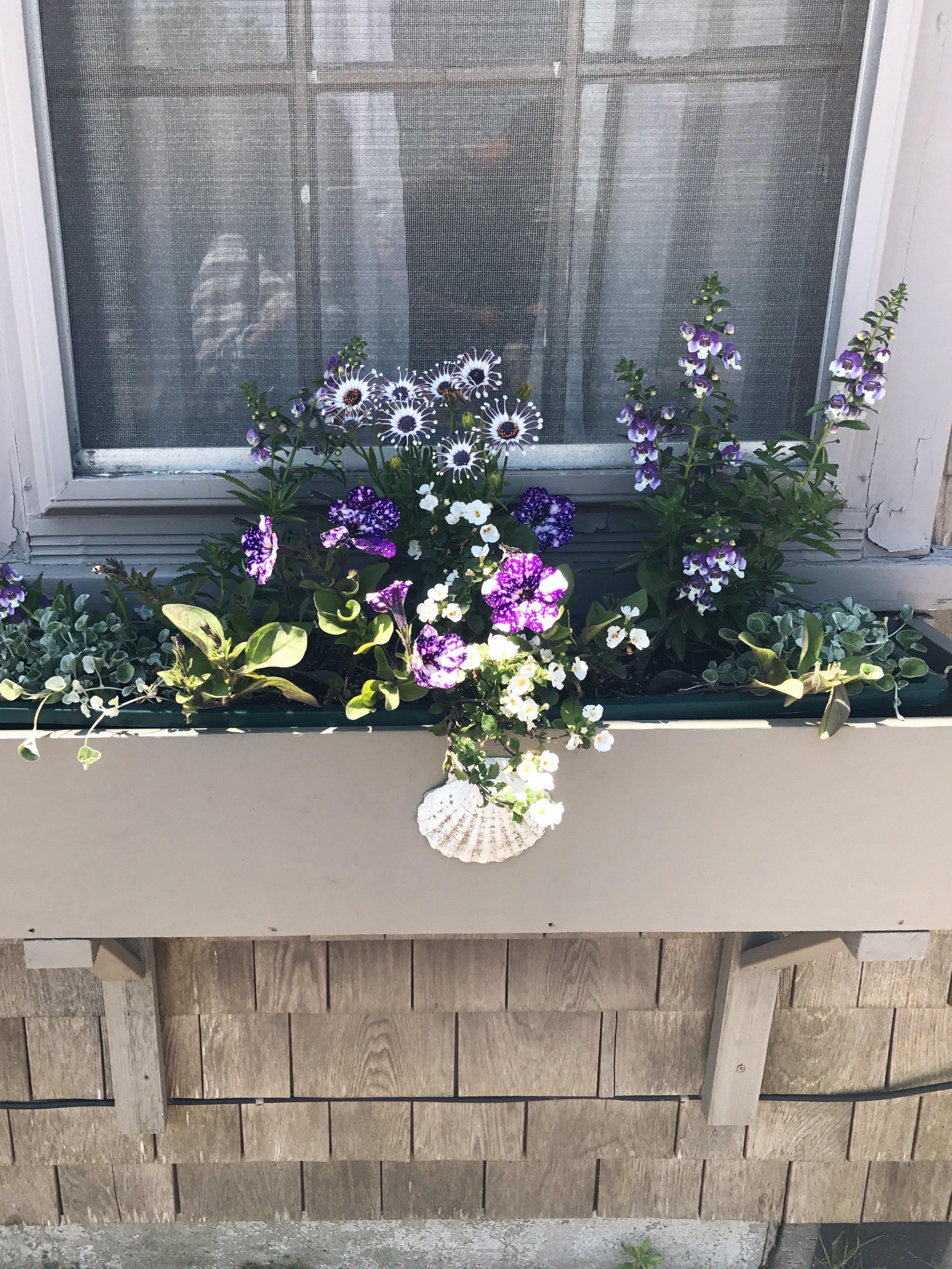 window box / flowers / nantucket travel diary