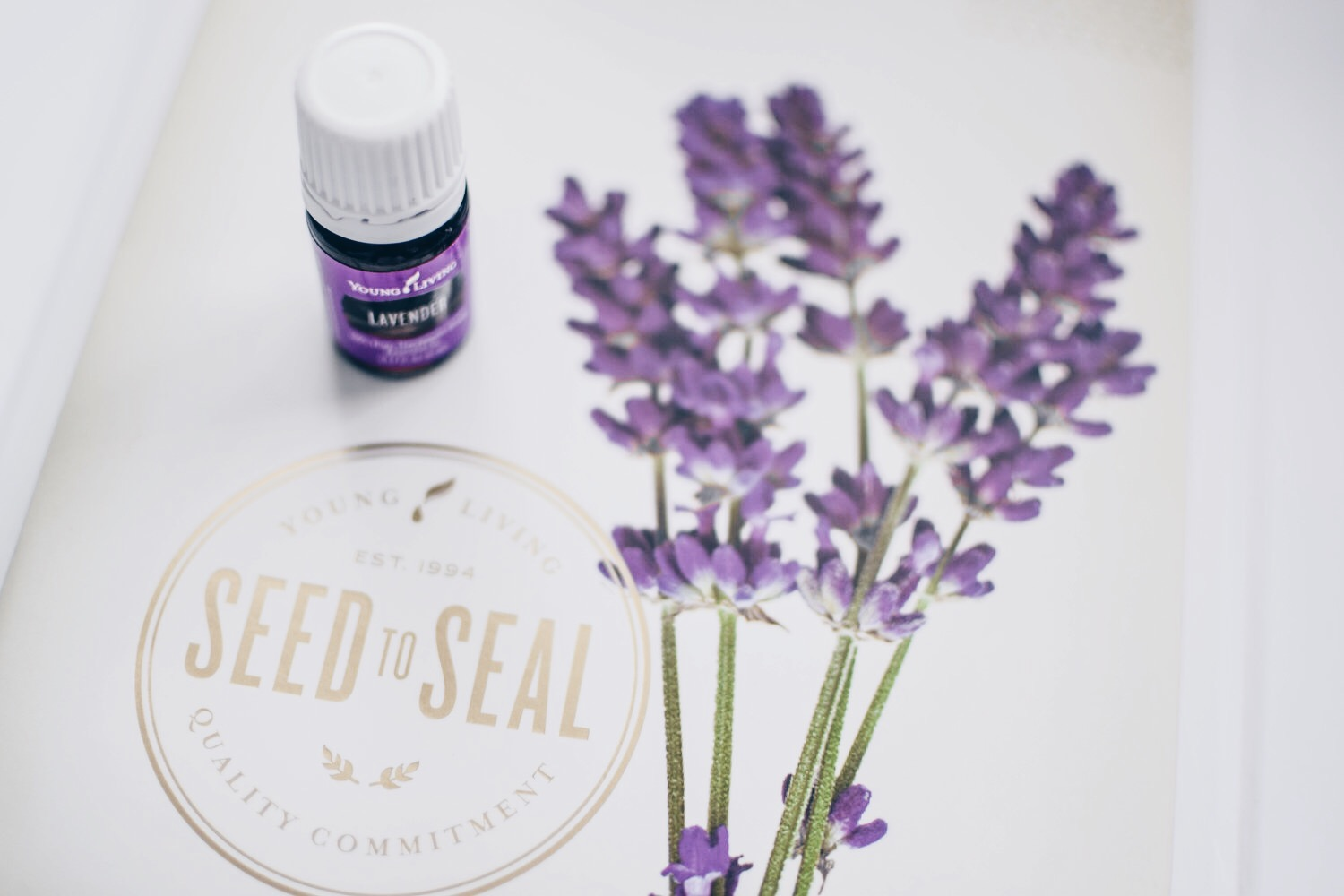 Essential Oils 101: What You Need to Know About Young Living | Pine Barren Beauty | about essential oils, how to use essential oils, how to get young living essential oils, why young living