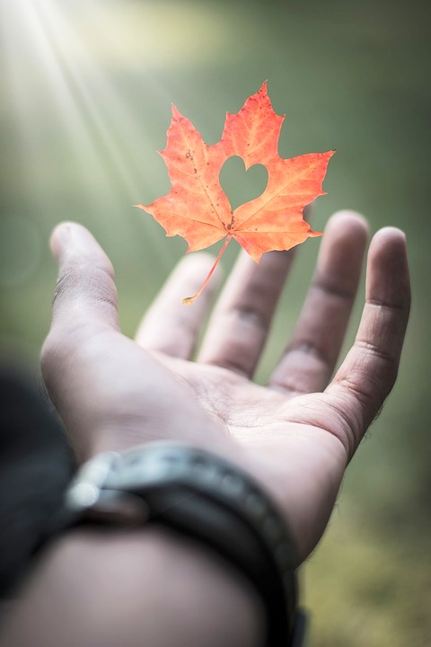"""I hope I can be the autumn leaf, who looked at the sky and lived. And when it was time to leave, gracefully it knew life was a gift.""  -Dodinsky"