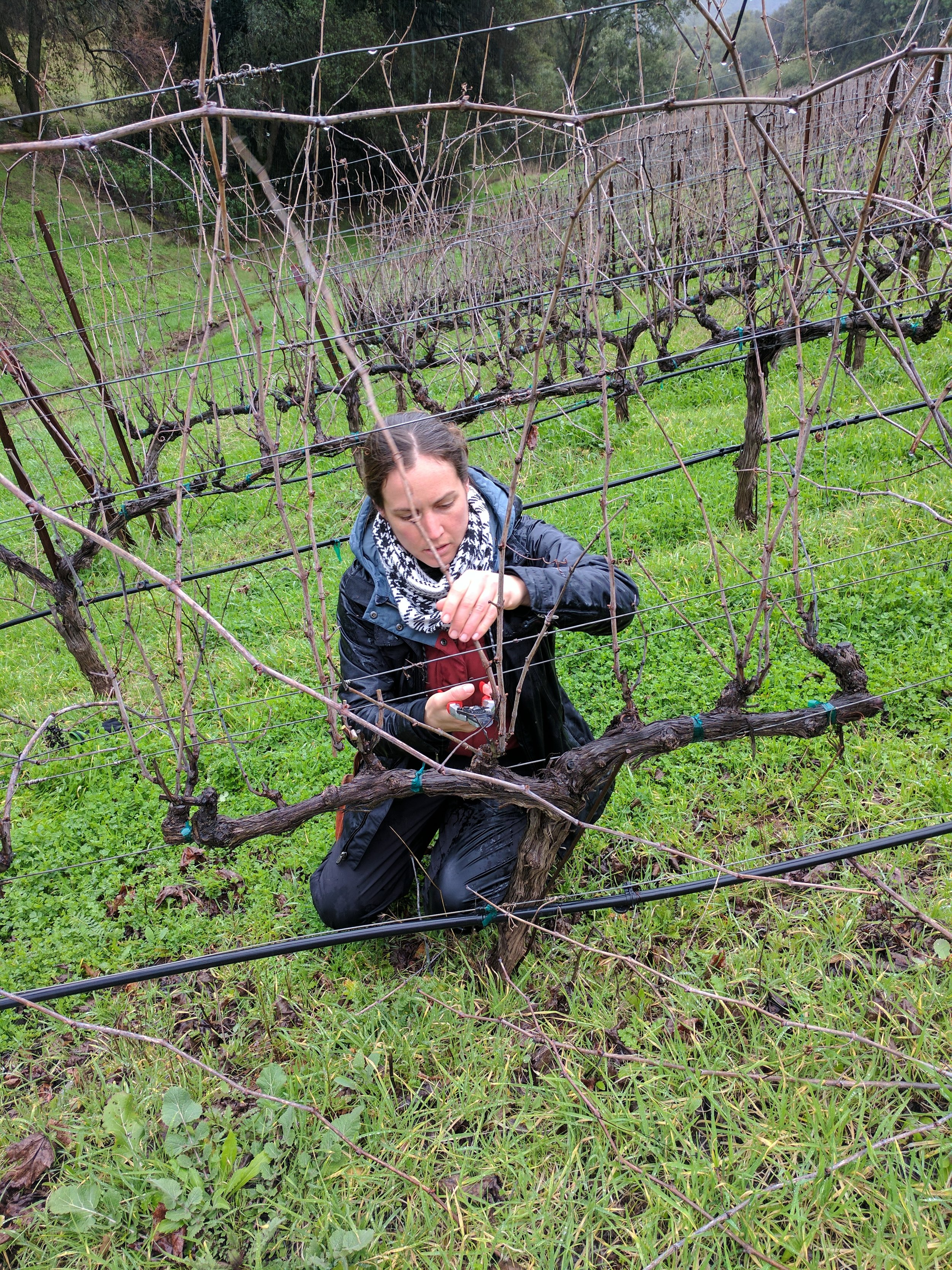 Martha Stoumen pruning Starry Night Vineyard Calaveras County 1.jpg