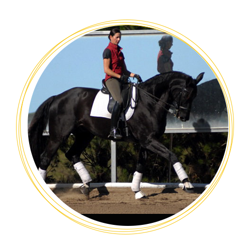Dressage Arena Mirrors