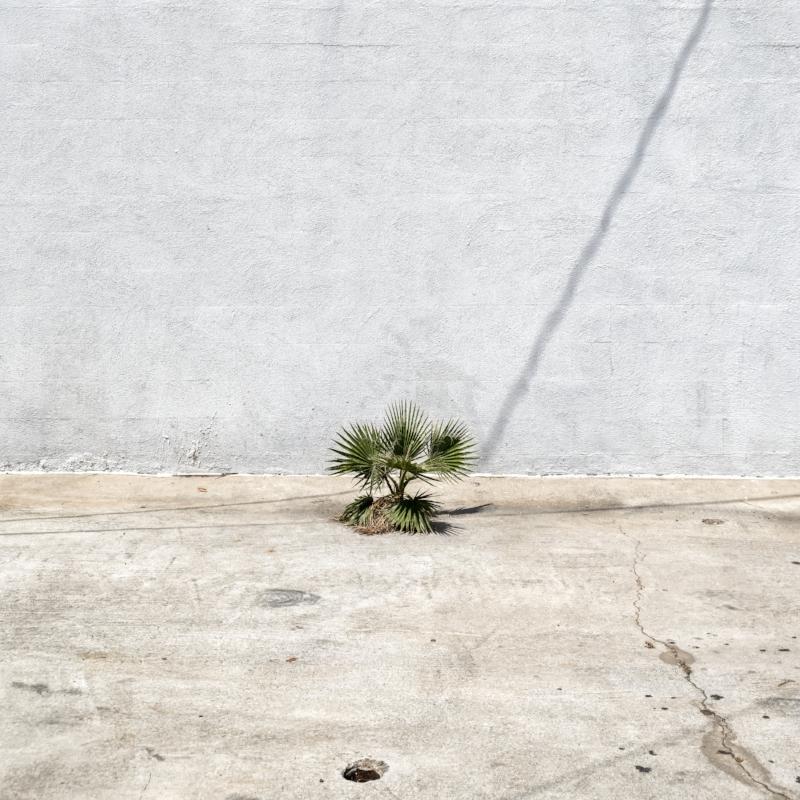 Concrete Oasis