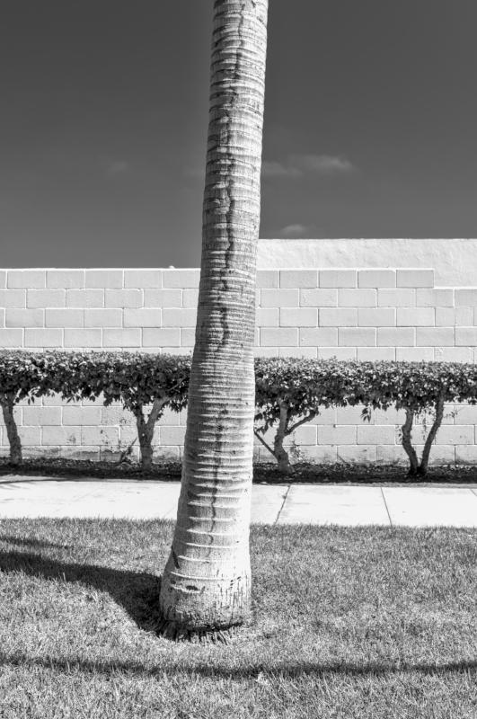 Palmtree Architecture b-w.jpg
