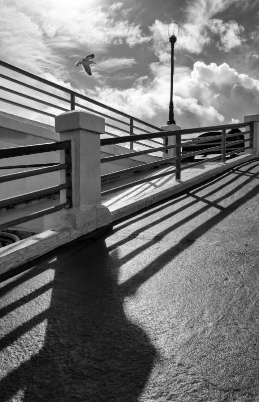 Oceanside Pier Seagull.jpg