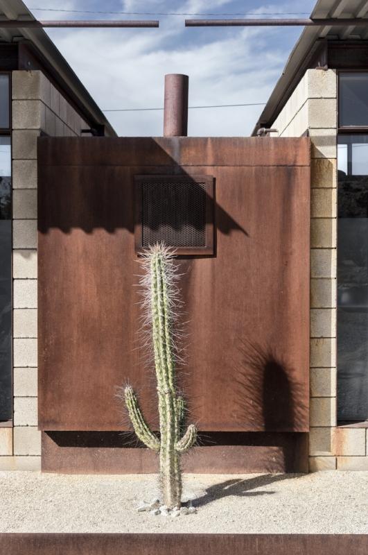 Desert Hot Springs Cactus