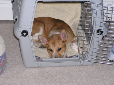 she loved her crate - as long as the door was open