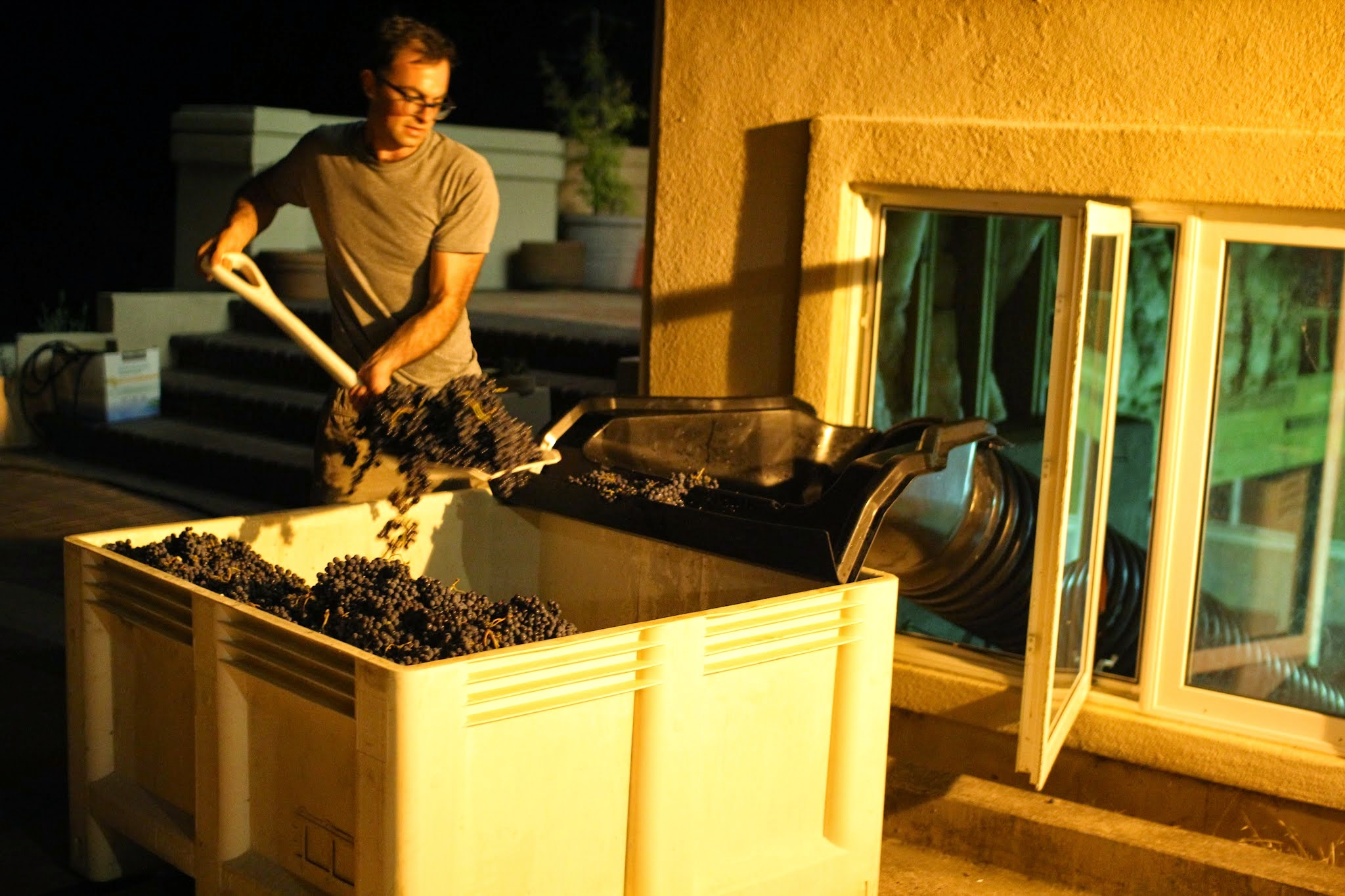 Shaunt Oungoulian shovelling grapes.JPG