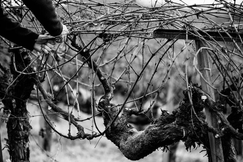 Chris Tynan Web Winemaker Napa.jpg