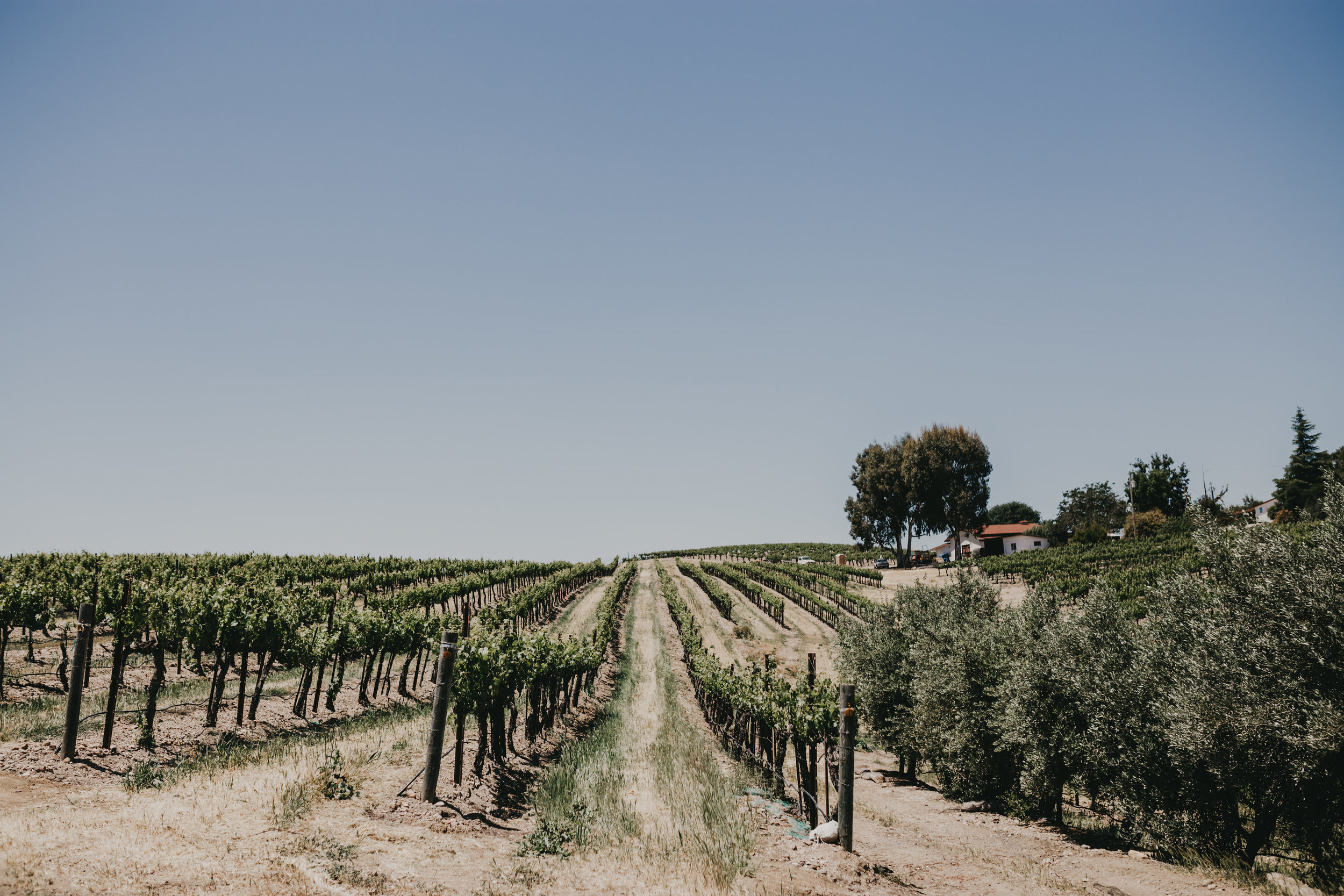 Paso-Robles-Wedding-Diana-Lake-Photography-K+A1.jpg