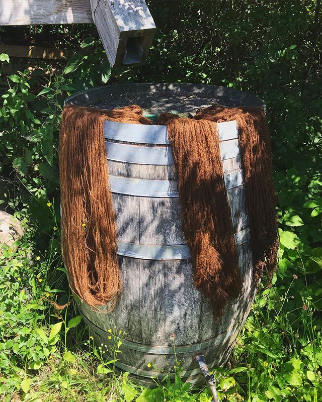 Farver med valnød og cochenille 😍 #plantdye #cochenille #walnut #dyebath #plantcolor