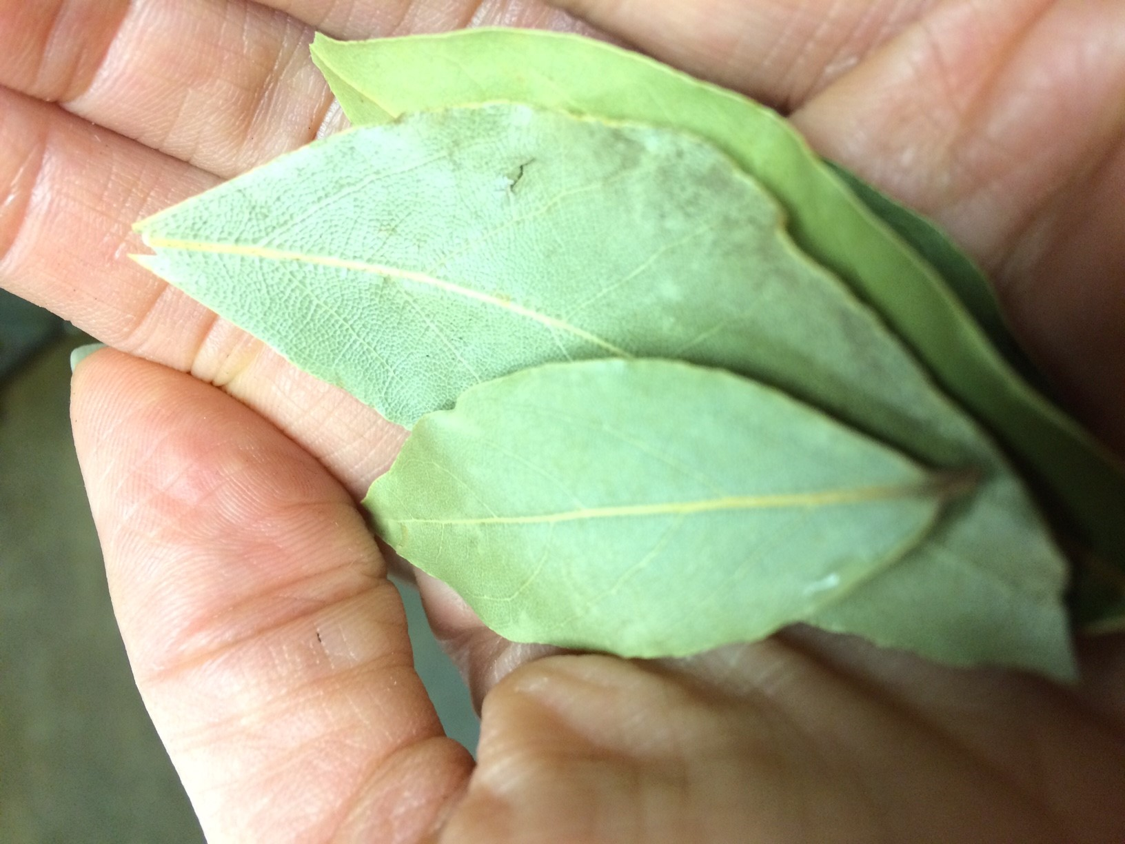 bay leaves.jpg